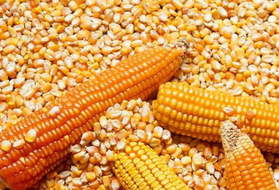 Preparar sopa de maíz y cangrejo