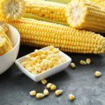 Importancia del maíz en la alimentación humana