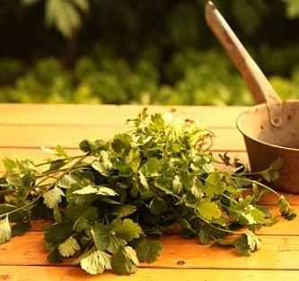¿Qué es y para qué sirve el cilantro?