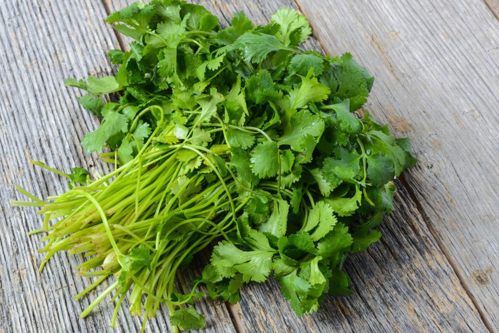 Cómo-se-usa-el-cilantro-fresco