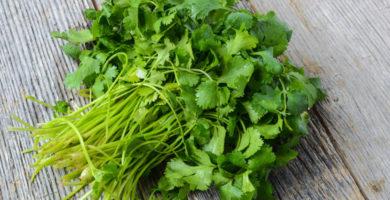 Cómo se usa el cilantro fresco